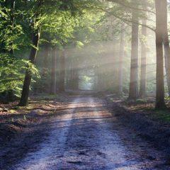 Mindfulness road